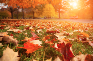 TODAY Is The First Day Of Fall